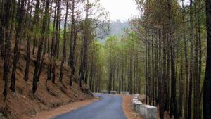 Pangot , Uttarakhand