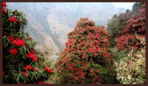 phool-dei-tyohar-Uttarakhand